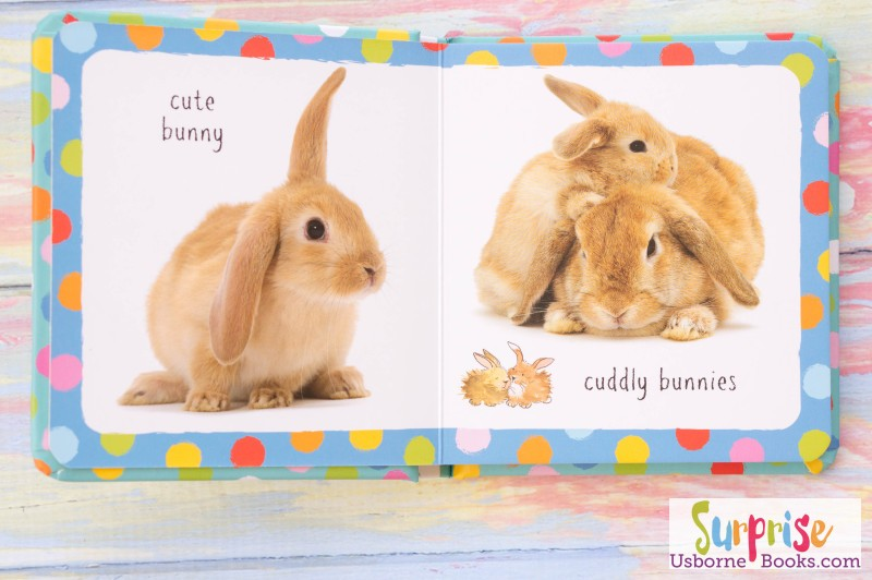 Little Book of Bunnies 1
