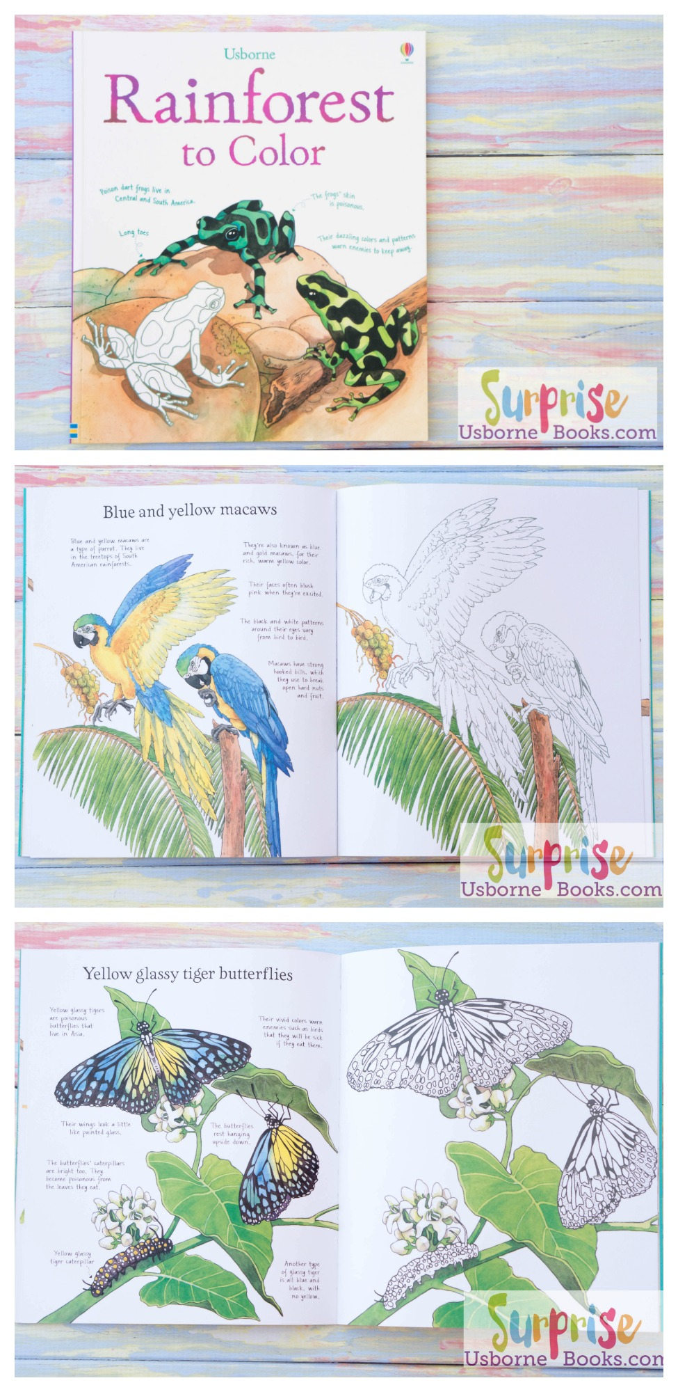 Rainforest to Color - Surprise Usborne Books