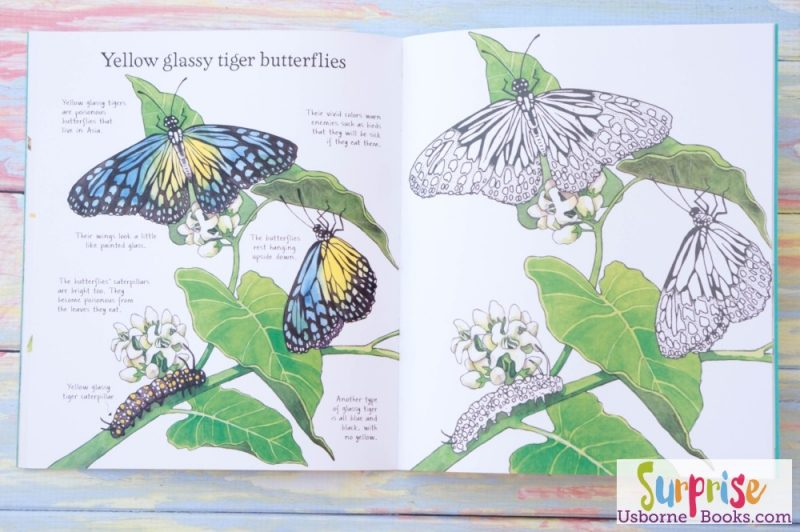 Usborne Rainforest to Color