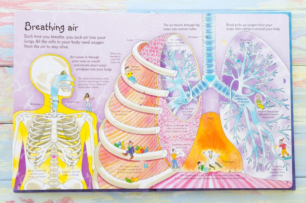 See Inside Your Body Usborne